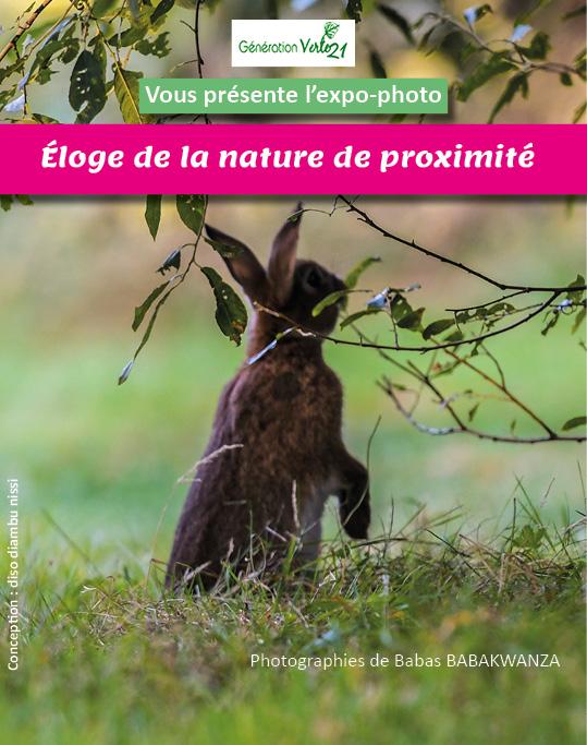 un lapin dans les bois